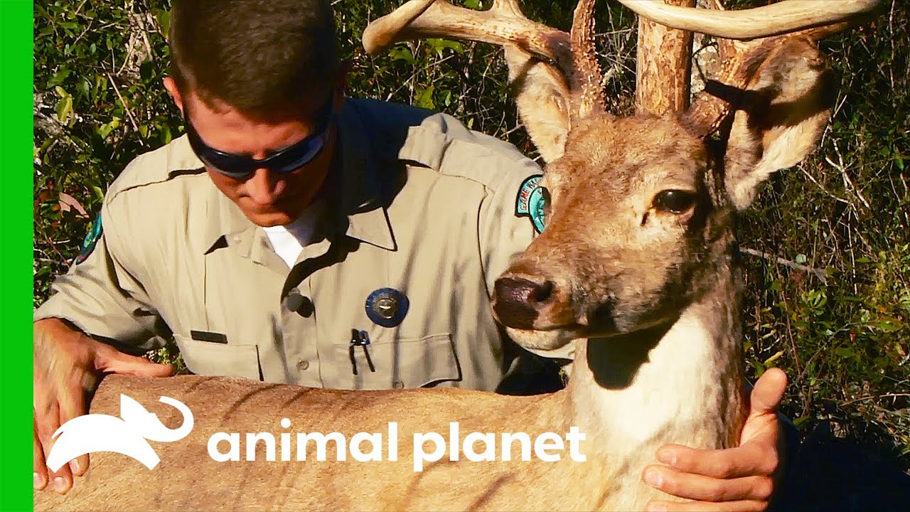 Game Wardens Plant Decoy To Catch Poachers | Lone Star Law - download from YouTube for free
