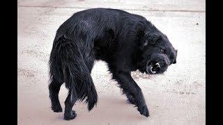 Людей приводит в замешательство странное поведения животных.Опасное соседство.Звери большого г орода