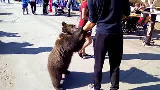 """"""" Говорят, что русские с медведями не гуляют""""."""