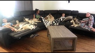 MY MORNING ROUTINE! | YOUNG MOM OF 2 BOYS & 4 SIBERIAN HUSKIES! | RAW FOOD DIET | LAZY SUNDAYS!