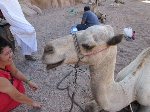 camel castration project