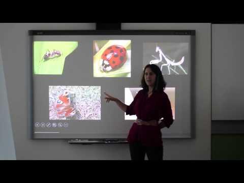 Palaeo 200 | Arthropoda