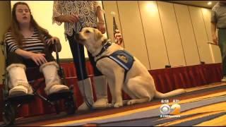 Service Dogs 'graduate' From Canine Companions' Training Program
