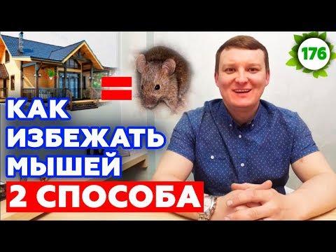 Грызуны любят каркасный дом? | Как защитить каркасный дом от мыши