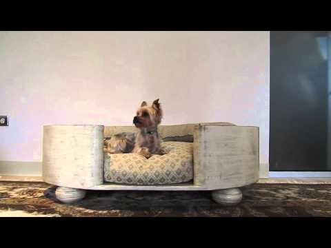 cute-yorkie-puppy-in-luxury-dog-bed