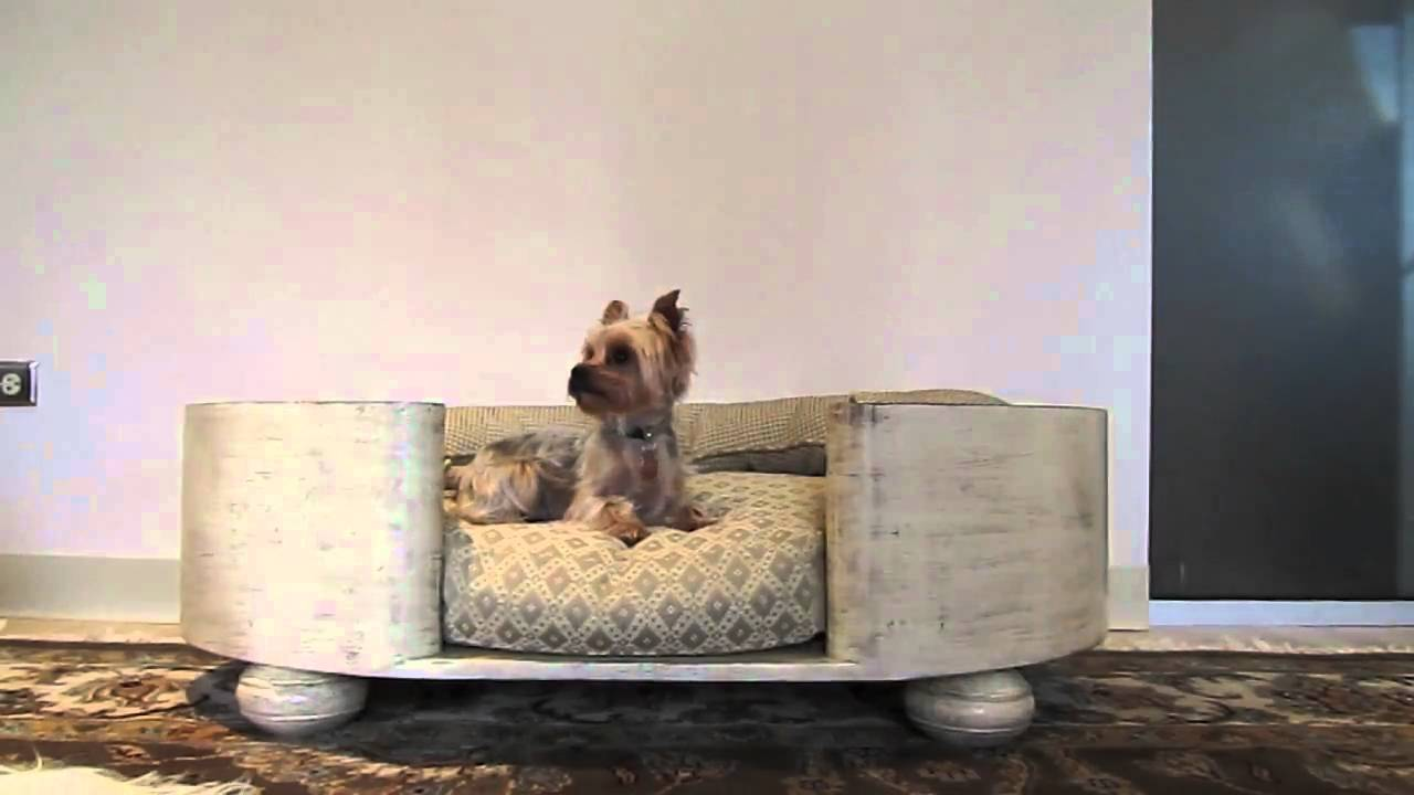 Cute Yorkie Puppy In Luxury Dog Bed Youtube