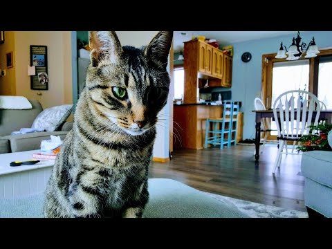 cats-have-catnip-and-become-very-playful-kittens-|-blessings-of-four-seasons-vlog