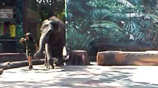 Taman Safari - Pertunjukan Gajah