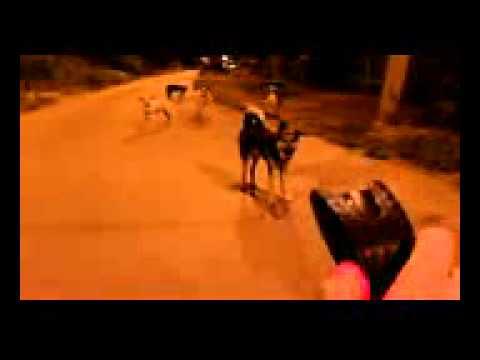 видео: Реакция собак на электрошокер