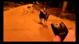Реакция собак на электрошокер(Собаки сильно боятся треска шокера и запаха озона вырабатываемого искрами., 2013-11-19T21:37:12.000Z)