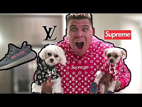 20000 Dog Supreme Louis Vuitton Outfits Dressing Puppies Like Me