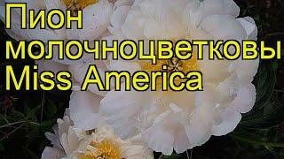 Пион молочноцветковый Мисс Америка. Краткий обзор, описание paeonia lactiflora Miss America