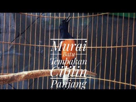 Original native bird endemic in indonesia