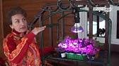 Лампа индукционная Steckermann для растений 200 W - YouTube