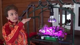 видео фитолампы для растений