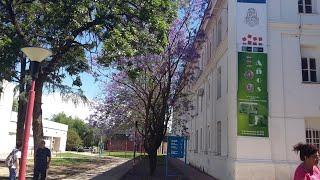 Corrupción en la facultad de odontología Lo anticipamos en el 2012
