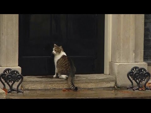 Cop Knocks on British Prime Minister's Door to Let Cat in Out of the Rain