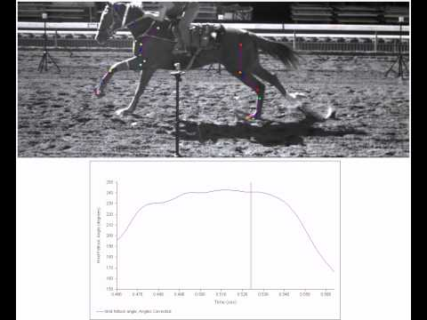 UCDavis Racetrack Surface Study: Hind fetlock angle while galloping on a dirt surface