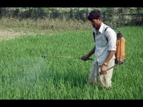 Farmers  Highly Exposed to Pesticides |kannada|