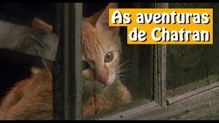 As aventuras de Chatran - Dublado - Filme Completo