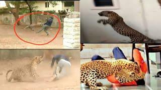 "NASHIK - बिबट्या हमला | थराराचे निराळे व्हिडीओ | Leopard Attack ""RARE VIDEO"" |2 Journalist Injured |"