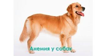 Анемия у собак. Ветеринарная клиника Био-Вет.