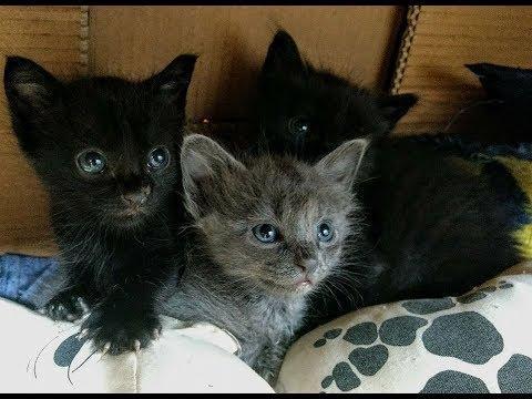 Gatinhos filhotes resgatado com 15 dias de vida, crescendo, brincando.