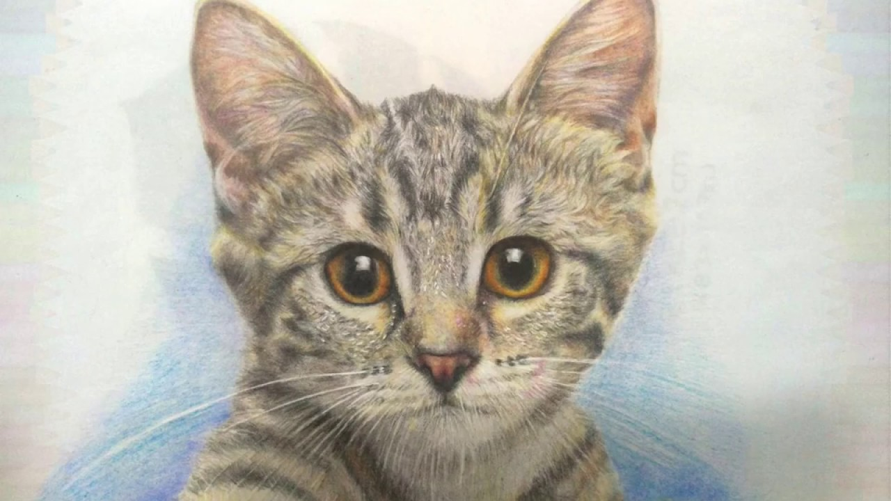 Drawing A Cat With Colored Pencils Speed Draw Hwei