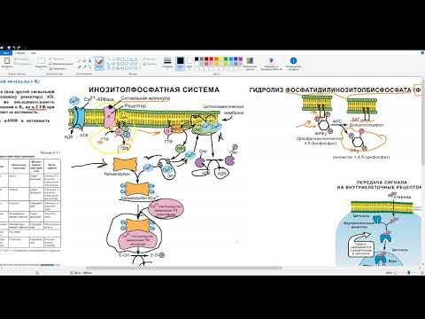 Биохимия лекция. Передача сигнала в клетку. Аденилатциклазная система. Инсулин Кортизол