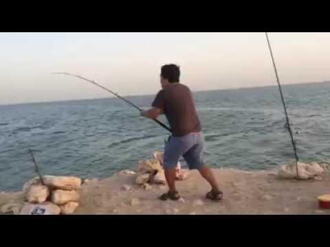 Doha fishing cobia  20 kg