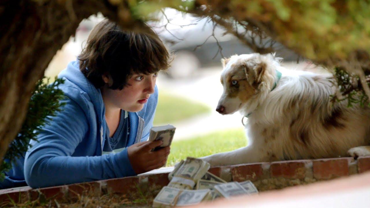 狗狗每天叼钱回家,主人最后发现狗狗知道打劫,喜剧电影