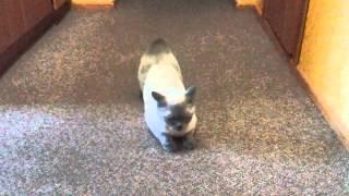 Кошке Русе, наверное, нужен кот
