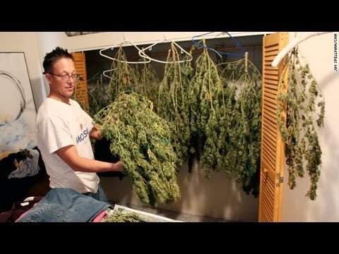 Growing Calls In US For Legalised Marijuana / HD