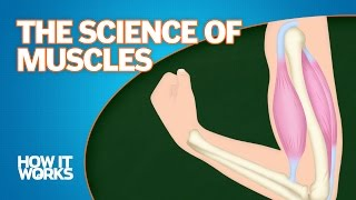 The Science of Muscles