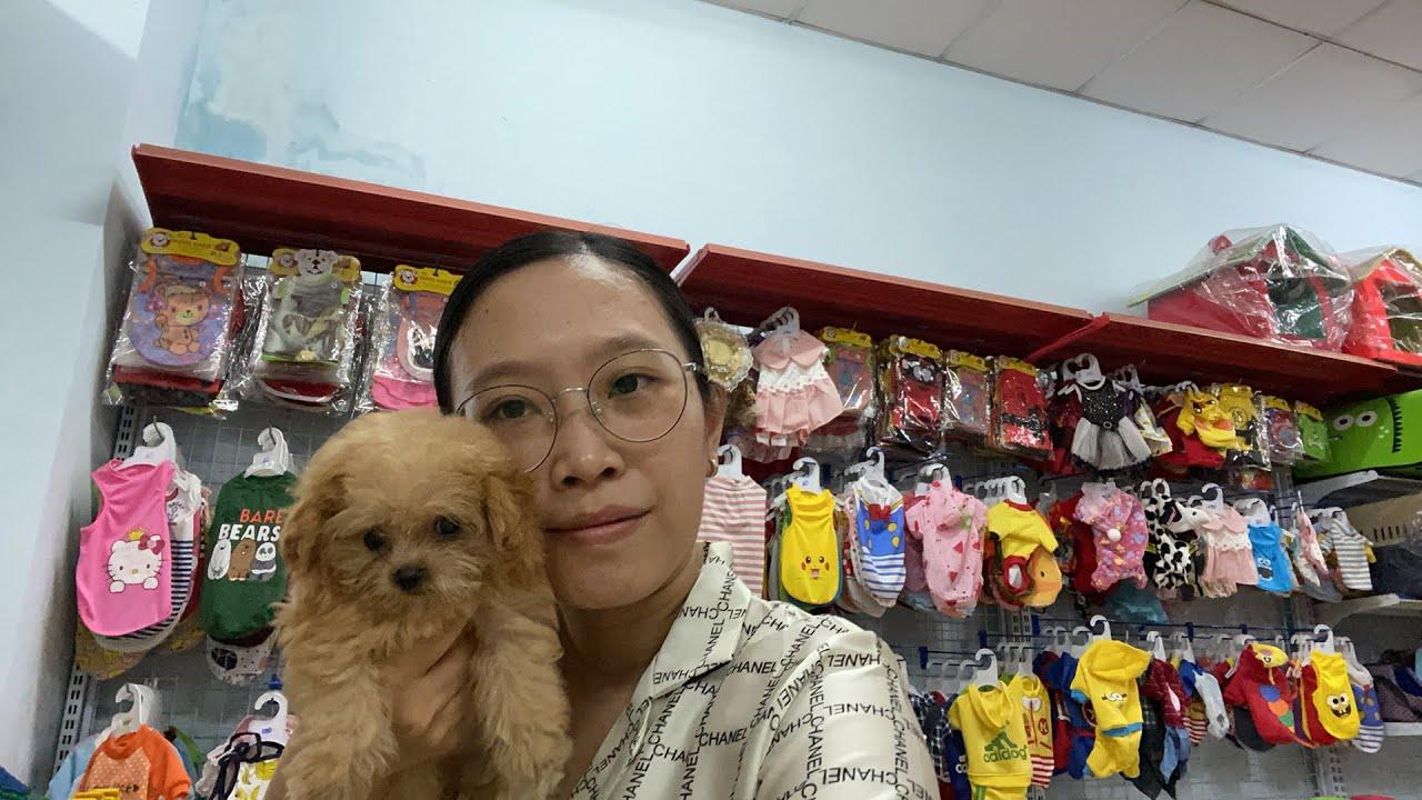 LIVESTREAM LoHa Pet Shop Bán chó phốc sóc, mèo chân lùn, hamster và vật dụng