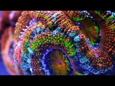 Coral Time-lapse