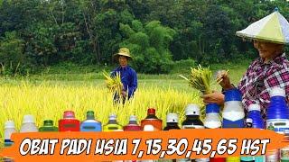 Download lagu Wajib Tahu❗ OBAT PADI UMUR 7, 15, 30, 45, dan 65 Hst - Obat Paling Ampuh Tanaman Padi