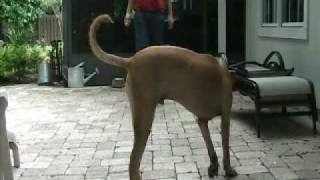 Ridgeback Learns To Find Front