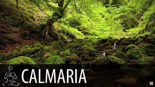 🎧 FLORESTA, RIACHO, PÁSSAROS ~ Água Corrente, Natureza ~ 8 horas de som ~ Relaxar, Dormir ~ ♫007