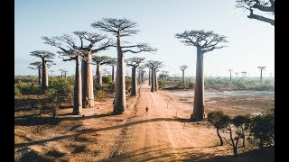 A Journey Exploring Tsingy & Baobab Trees in Madagascar
