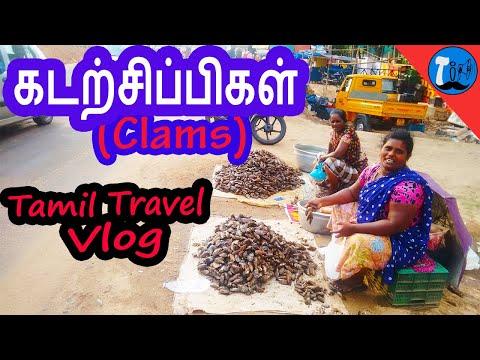 Vlog#7: Clams Fishing and Cooking Kerala   Tamil Travel Vlog