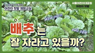 서울어린이대공원 어린이 가을 텃밭 체험교실 5편 ㅣ 배추 알아보기썸네일