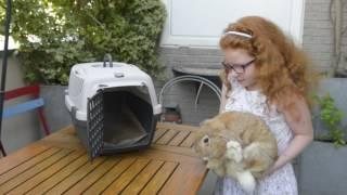 Les vacances du lapin