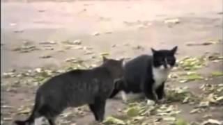 Драка кошек и мент собака! всем смотреть)))