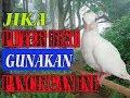 Mantab Pancingan Rapat Kompilasi Puter Gacorputer Albino Gacor Tanpa Jedanantang Manggun  Mp3 - Mp4 Download