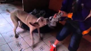 Niños Jugando Con Perro