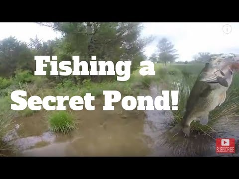 Topwater WAKEBAIT Fishing My SECRET POND For BIG VIRGINIA BASS (Bank Fishing!)