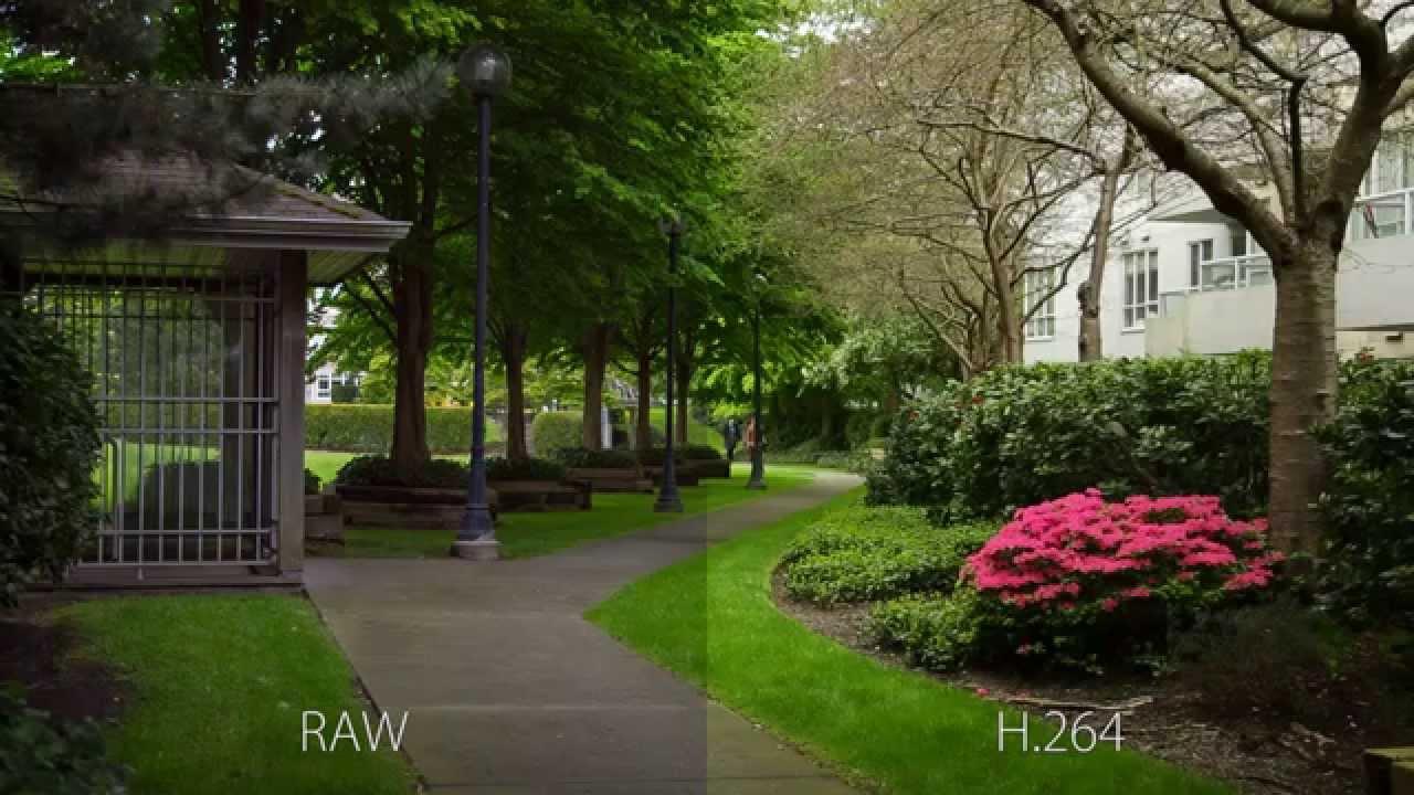 Canon 5D Mark III DSLR RAW vs  H 264 Video - Magic Lantern RAW Video