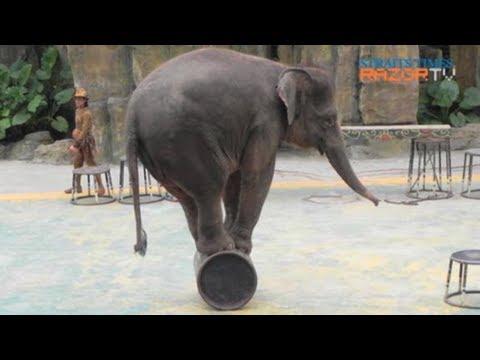 Are animal shows cruel? (Wildlife in Singapore Part 1)