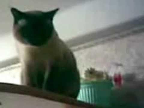 Вызыв рвоты у кота